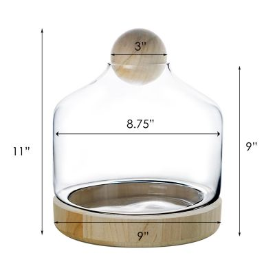 "11.5"" Danish Terrarium Glass Dome Cloche with Ball Stopper and Wood Base"