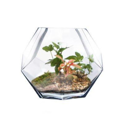 """6"""" Geometric Faceted Gem Glass Terrarium Vases"""
