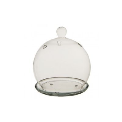"4.5"" Glass Plant Terriarium Mini Cloche"