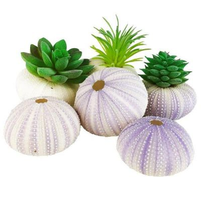 "1.25""-2"" Multi-Color Natural Sea Urchin Shells Bowl Vase Fillers"