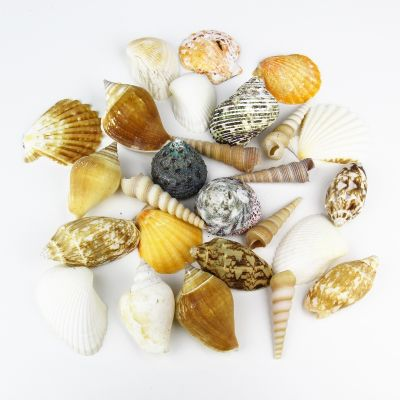Natural Mixed Shells in Bulseta Bag Bowl Vase Fillers