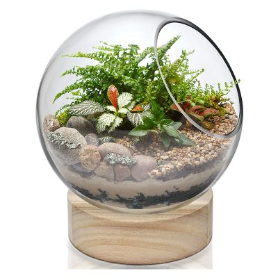 "Slant Cut Bubble Terrarium Bowls with Wood Base. H-8.5"" (Free Shipping)"