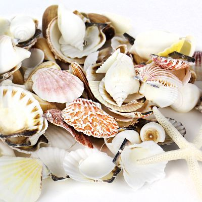 Mixed Shells with Bleached Finger Starfish Bowl Vase Fillers