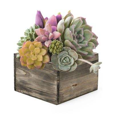 """Natural Brown Wood Square Planter Box With Metal Zinc Liner (H:4"""" Open:6""""x6"""")"""