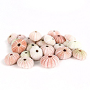 Shop Sea Shell Accessories