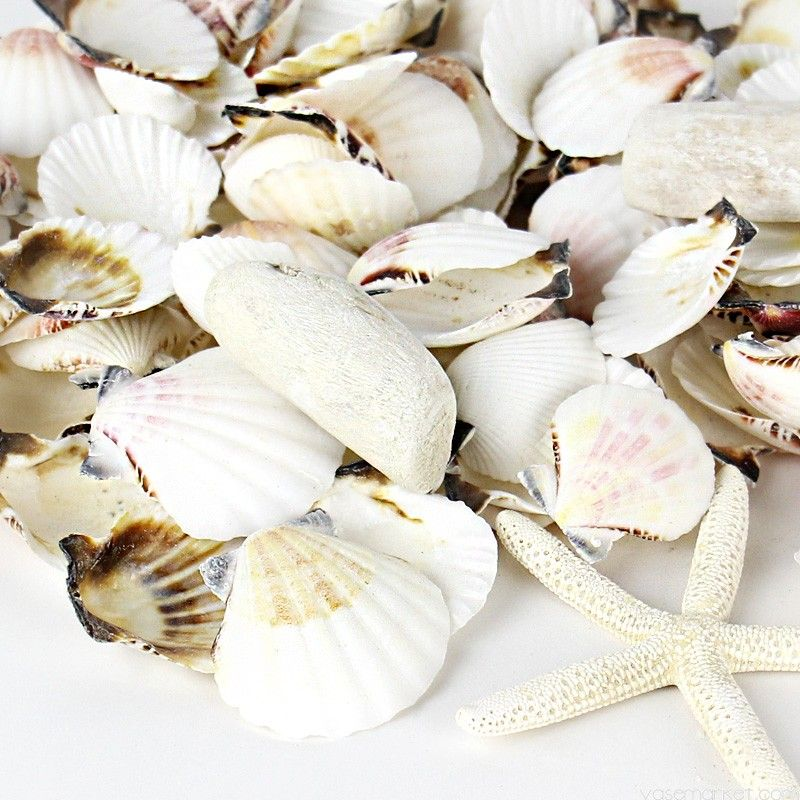 White Mixed Shells With Finger Starfish Bowl Vase Fillers Glass