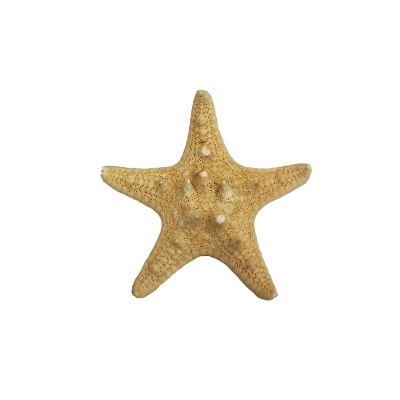 "1""-2"" Natural Knobby Horned Sea Star Vase Fillers"