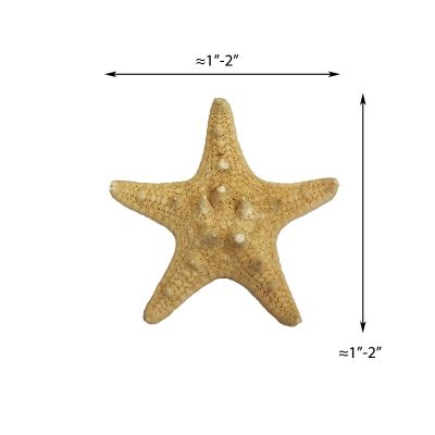 "1""-2"" Natural Knobby Horned Sea Star Vase Fillers"