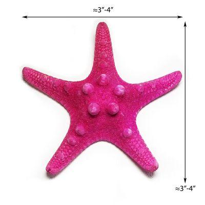 """3""""-4"""" Fuchsia Pink Knobby Horned Sea Star Vase Fillers"""