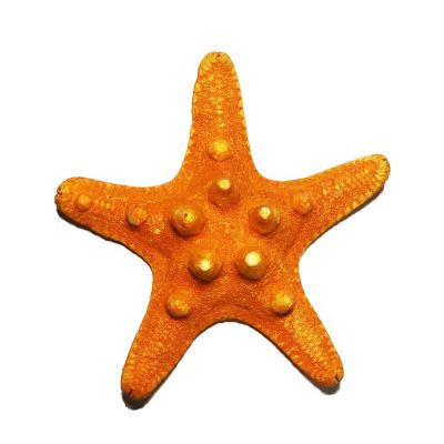 "3""-4"" Sunset Orange Knobby Horned Sea Star Vase Fillers"
