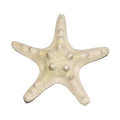 """3""""-4"""" White Knobby Horned Sea Star Vase Fillers"""