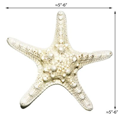 "5""-6"" White Knobby Horned Sea Star Vase Fillers"