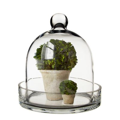 """8"""" Glass Dome Cloche Plant Terrarium Bell Jar with Glass Tray"""