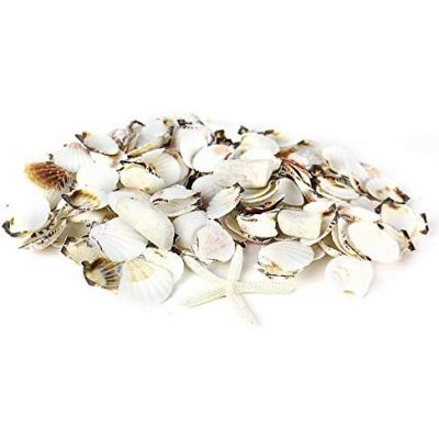 White Mixed Shells with Finger Starfish Bowl Vase Fillers