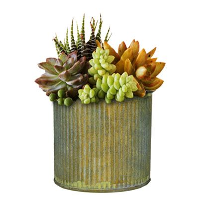 "3"" x 3"" Zinc Metal Planter Cups with Rustic Steel Antique Finish"
