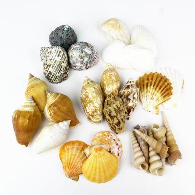 Natural Mixed Shells in Bulseta Bag Bowl Vase Fillers