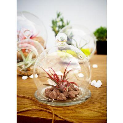 """4.5"""" Glass Plant Terriarium Mini Cloche"""