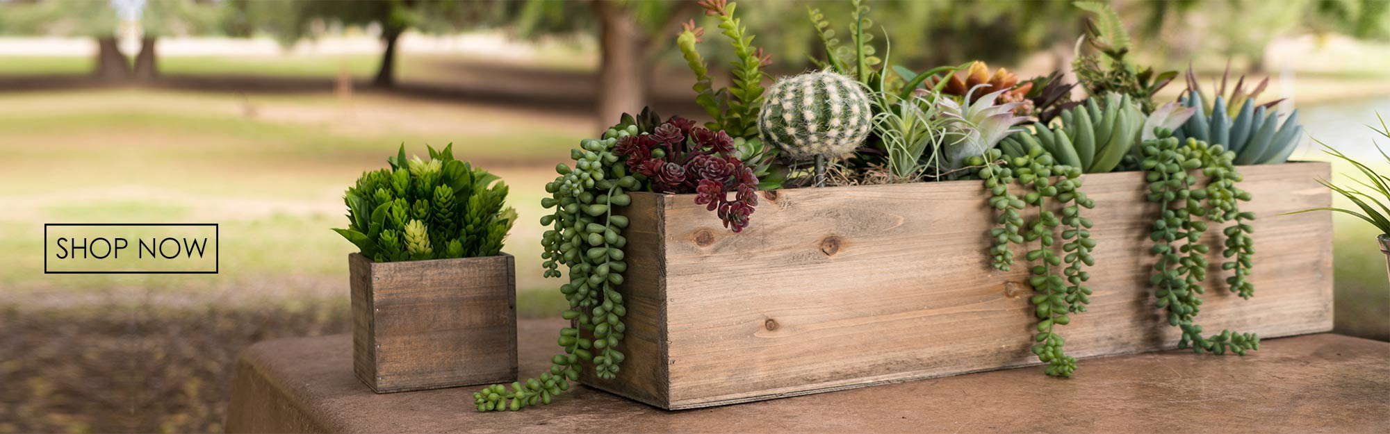 Click to view more woodbox planters